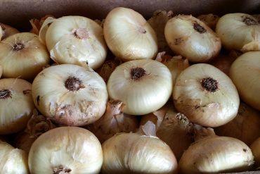 Cipolla Fara